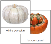 Pumpkins and Squash Picture Cards - Printable Montessori materials by Montessori Print Shop.