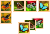 Butterfly Matching Cards - Printable Montessori preschool materials by Montessori Print Shop.