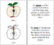 Apple Nomenclature Book - Printable Montessori Nomenclature Materials by Montessori Print Shop.