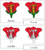Flower Nomenclature Cards - Printable Montessori Nomenclature Materials for home and school.