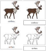 Caribou Nomenclature Cards - Printable Montessori nomenclature cards by Montessori Print Shop.