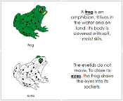 Frog Nomenclature Book - FREE Printable Montessori Nomenclature Materials by Montessori Print Shop.