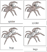 Spider Nomenclature Cards - Printable Montessori nomenclature cards by Montessori Print Shop.