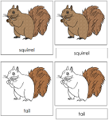 Squirrel Nomenclature Cards - Printable Montessori nomenclature cards by Montessori Print Shop.