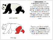 Giant Panda Nomenclature Book (red) - Printable Montessori Nomenclature Materials by Montessori Print Shop.