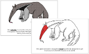 Anteater Nomenclature Book (Red) - Printable Montessori Nomenclature Materials by Montessori Print Shop.