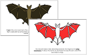 Bat Nomenclature Book (Red) - Printable Montessori Nomenclature Materials by Montessori Print Shop.
