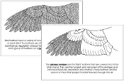 Wing Nomenclature Book - Printable Montessori Nomenclature Materials by Montessori Print Shop.