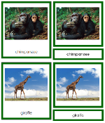 African Animals - Printable Montessori geography materials by Montessori Print Shop.