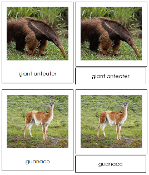 South American Animal Cards - Printable Montessori geography materials by Montessori Print Shop.