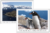 Antarctica Continent Cards - Printable Montessori geography materials by Montessori Print Shop.
