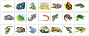 Amphibian Cutting Strips - Printable Montessori preschool Materials by Montessori Print Shop.