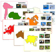 Animals of the Continents Set 2 (color) - Printable Montessori geography materials by Montessori Print Shop.