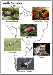 Animals of the Continents - Printable Montessori geography materials by Montessori Print Shop.