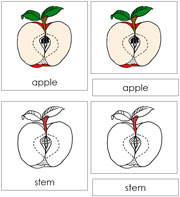 Apple Nomenclature Cards (in red) - Printable Montessori materials by Montessori Print Shop.