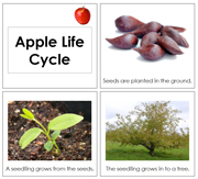 Toddler Apple Life Cycle Book - Printable Toddler Montessori Materials by Montessori Print Shop.