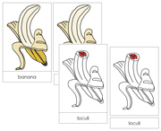 Banana Nomenclature Cards (Red) - Printable Montessori Nomenclature Materials by Montessori Print Shop.