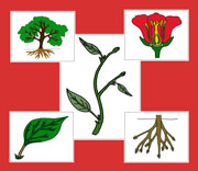 Botany Nomenclature Bundle (Red) - Set 1 - Printable Montessori Materials for children.