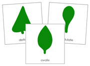 Botany Cabinet Leaf Shape Cards - Printable Montessori Sensorial materials by Montessori Print Shop.
