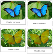 Butterflies Safari Toob Cards - Printable Montessori Toob Cards by Montessori Print Shop.