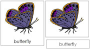 Butterfly Nomenclature Cards - Printable Montessori nomenclature cards by Montessori Print Shop.