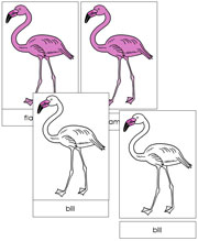 Flamingo Nomenclature Cards - FREE Printable Montessori materials by Montessori Print Shop