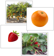 Fruit and Plant Matching Cards - Printable Montessori preschool materials by Montessori Print Shop.