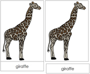 Giraffe Nomenclature Cards - Printable Montessori nomenclature cards by Montessori Print Shop