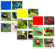 Insect Color Sorting Cards - Printable Montessori sensorial materials by Montessori Print Shop.