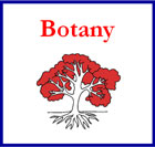 Botany Montessori Nomenclature Cards (red highlights)