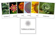 Patterns in Nature - Printable Montessori science materials by Montessori Print Shop.
