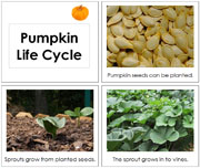 Toddler Pumpkin Life Cycle Book - Printable Toddler Montessori Materials by Montessori Print Shop.