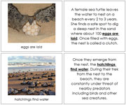 Sea Turtle Life Cycle Book - Printable Montessori materials by Montessori Print Shop.