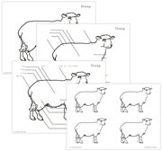 Elementary Sheep Nomenclature - Printable Montessori Elementary Nomenclature