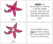 Starfish Nomenclature Book - Printable Montessori materials by Montessori Print Shop.