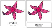 Starfish Nomenclature Cards - Printable Montessori nomenclature cards by Montessori Print Shop.