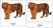Tiger Nomenclature Cards - Printable Montessori nomenclature cards by Montessori Print Shop.