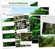 Tropical Rainforests - Printable Montessori science materials by Montessori Print Shop.