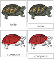 Turtle Nomenclature Cards (in red) - Printable Montessori materials by Montessori Print Shop.