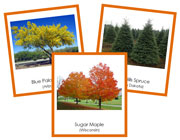 US State Trees 3-Part Cards - Printable Montessori materials by Montessori Print Shop.