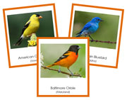 US State Birds 3-Part Cards - Printable Montessori materials by Montessori Print Shop.