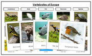Europe Vertebrate Sorting - Montessori Print Shop