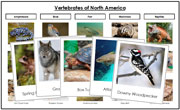 North America Vertebrate Sorting - Montessori Print Shop