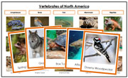 North America Vertebrate Sorting (color borders) - Montessori Print Shop