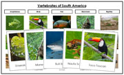 South America Vertebrate Sorting (color borders) - Montessori Print Shop