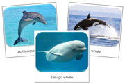 Whales & Dolphins Safari Toob Cards - Printable Montessori Toob Cards by Montessori Print Shop.