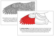Wing Nomenclature Book (Red) - Printable Montessori Nomenclature Materials by Montessori Print Shop.