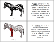 Zebra Nomenclature Book (Red) - Printable Montessori Nomenclature Materials by Montessori Print Shop.