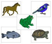 Zoology Nomenclature Bundle - Set 1 - Printable Montessori Materials for children.
