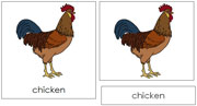 Chicken Nomenclature Cards - Printable Montessori nomenclature cards by Montessori Print Shop.
